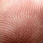 Curiosidades y datos sobre la piel