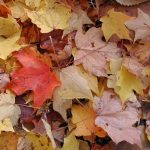 Psoriasis en otoño: Recomendaciones y consejos útiles