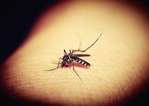 mosquitoe-1548975_1920